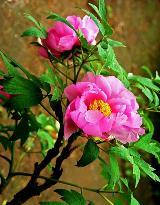 漂亮的花��