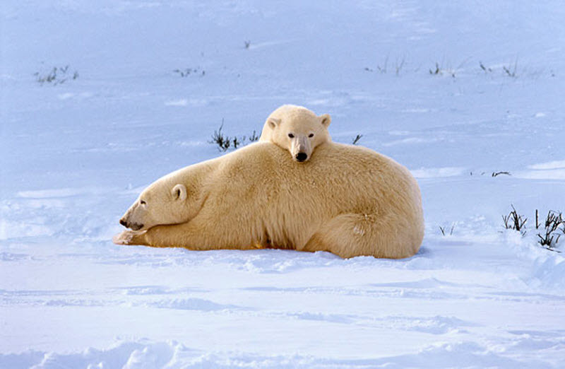 动物家庭温馨有爱瞬间