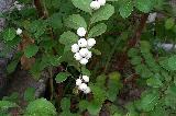 美��花世界―艾美花行的小小花圃-果��篇