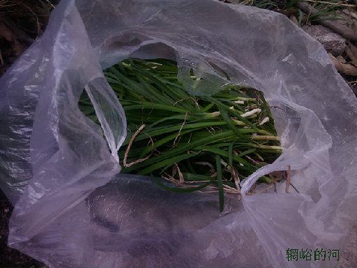 辋峪韭菜香