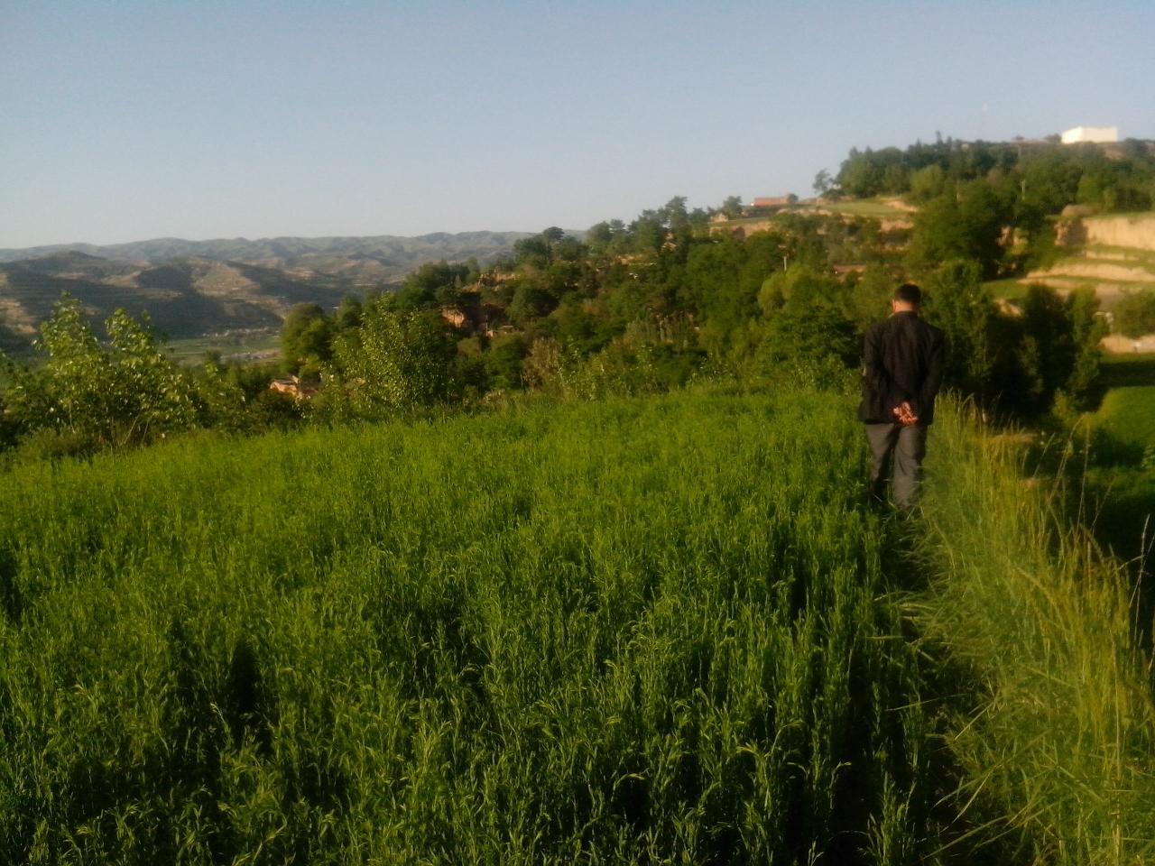 关于家乡风景的图画