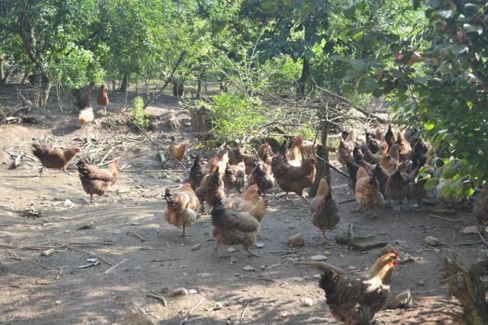 利川市残疾人野生动物养殖示范基地