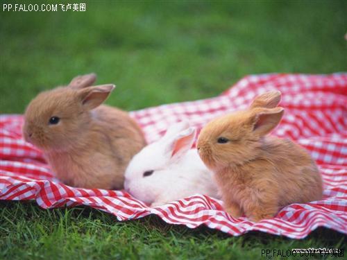 可爱的小兔子-清苑论坛-手机清苑在线