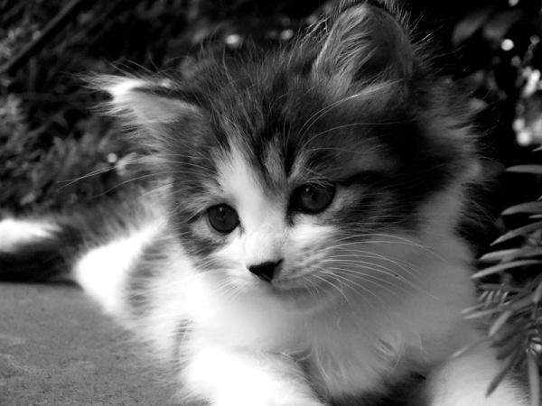 黑白色调 小猫咪