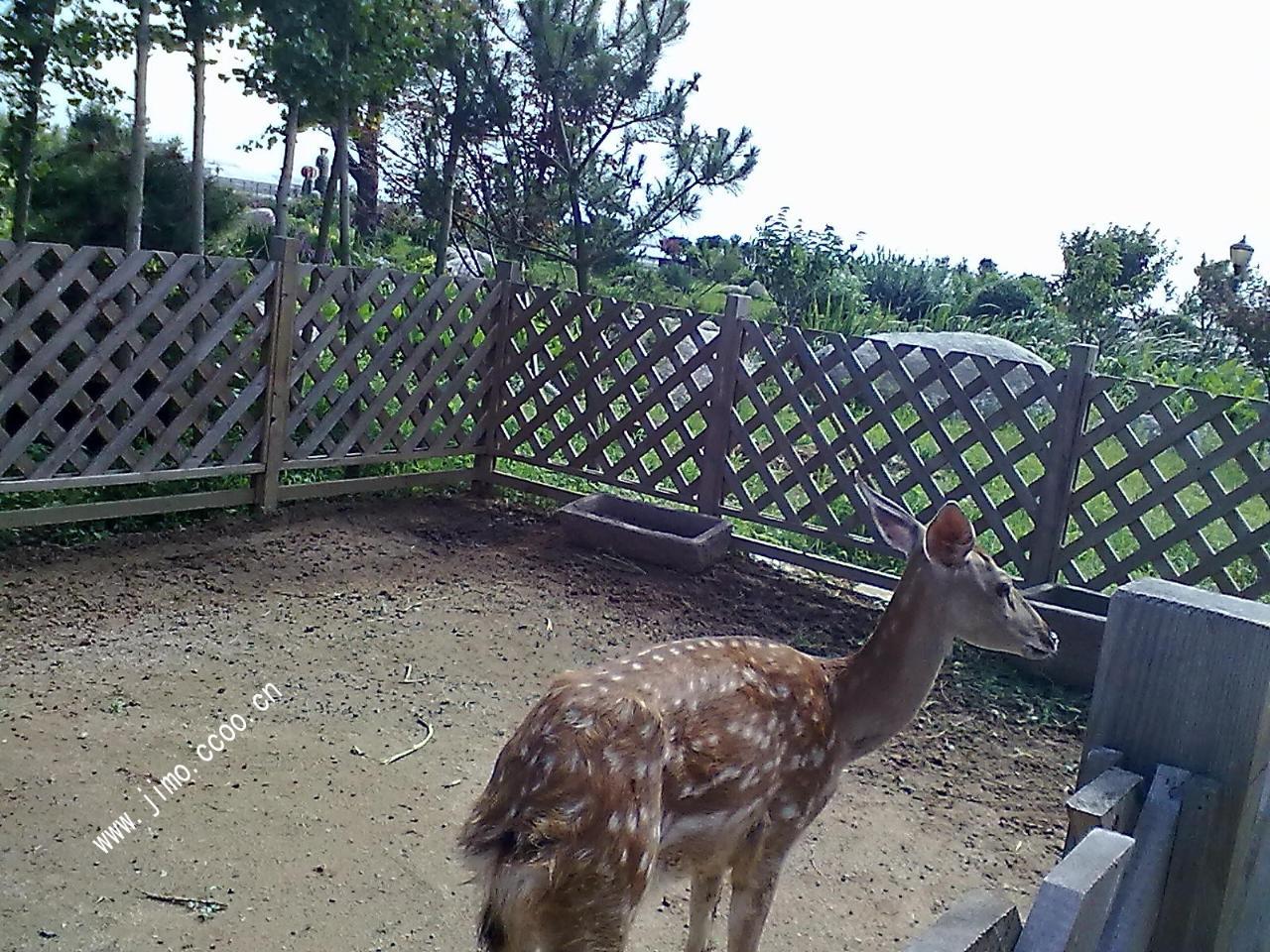 [原创]院子里的小动物