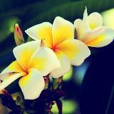 [原创]就那么一张好看的花。。。。
