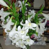 拍摄的时候配上淮北玫瑰夫人花坊的鲜花岂不更漂亮!