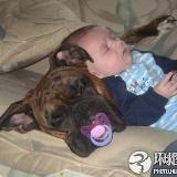 可爱,可笑的宝宝和宠物