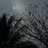 太阳呢还是月亮?考考诸位的判断力!