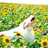 亲爱的,花儿又开了,我们结婚吧!好靓好幸福哦