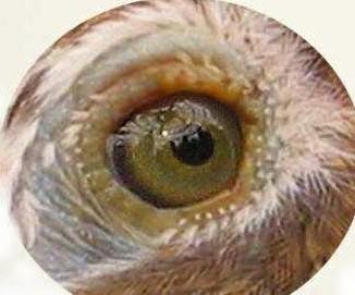 最全的画眉眼水图谱