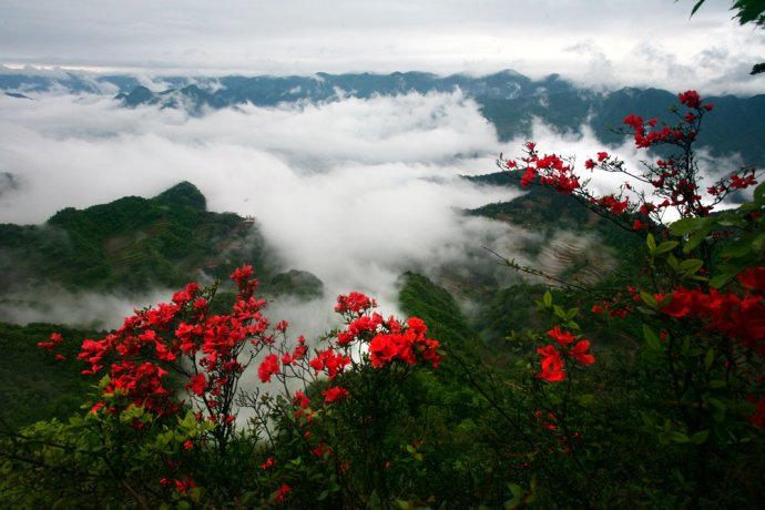 旅游景点:漫山遍野杜鹃红――利川苏马荡〈照片多幅〉