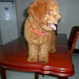 [原创]晒晒我可爱的狗狗