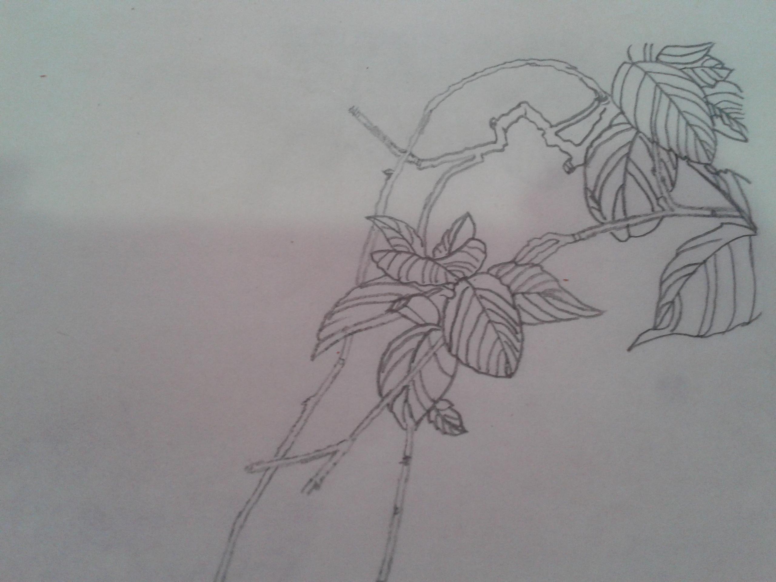简单素描画步骤图片