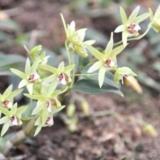 [讨论]贵州金茂生物科技有限公司 铁皮石斛种植的黄金季节
