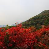 情糸�t山