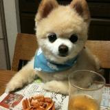 带宠物狗进餐厅,合适吗?