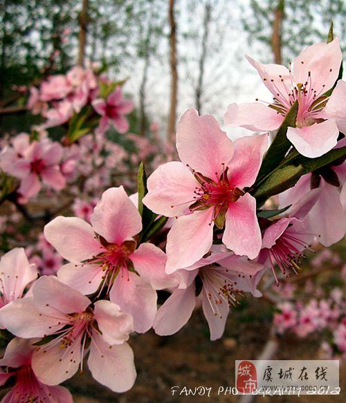 [原创]四月桃花