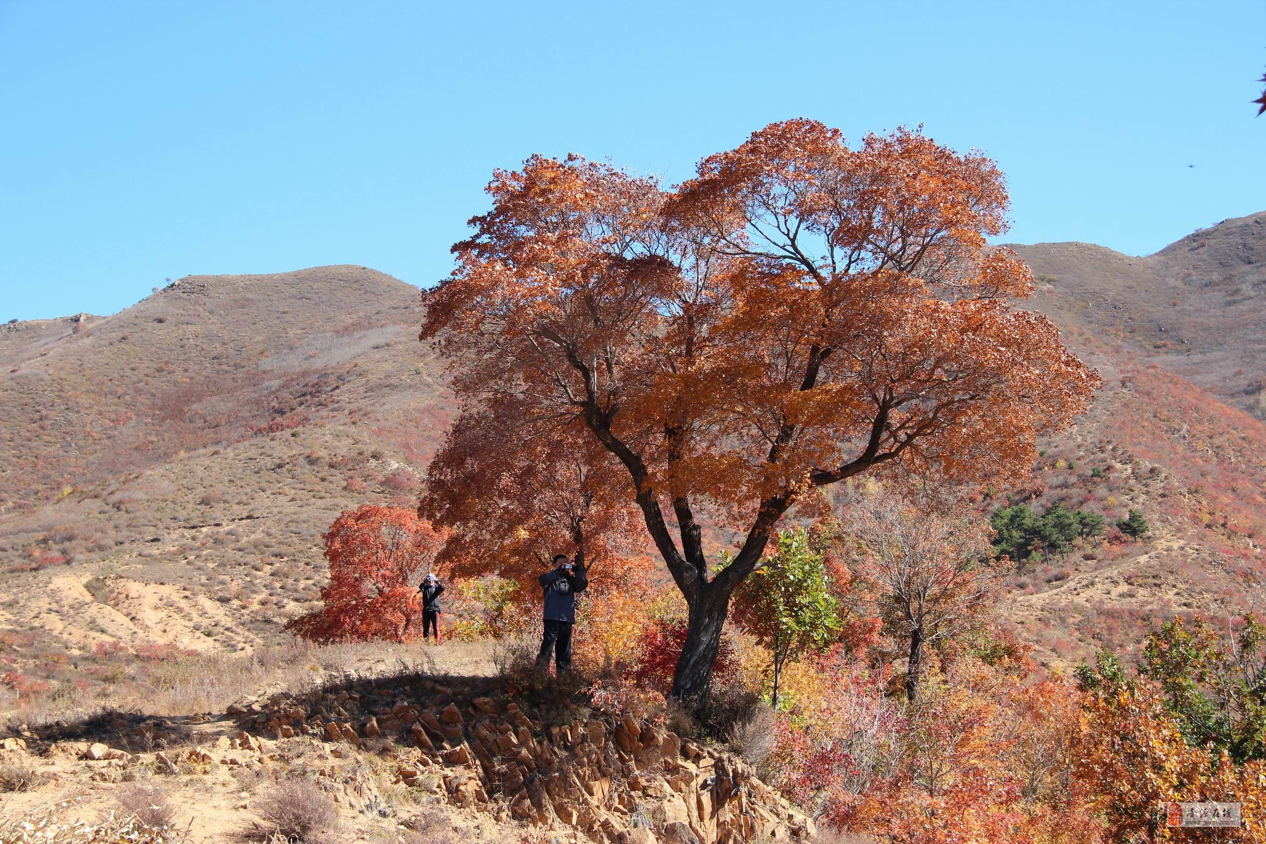 秦皇岛红叶景点
