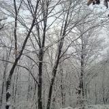 晒晒去年拍的雪景