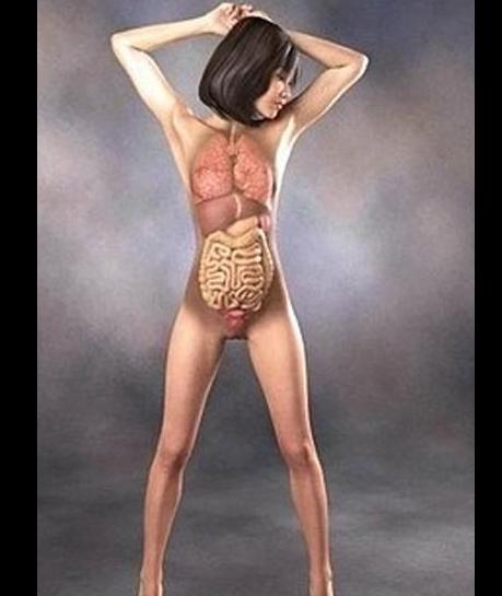 3d美女医学人体解剖图