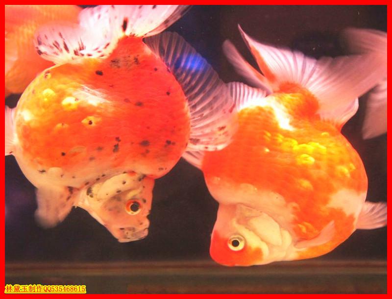 动物世界4――漂亮的鱼(2)