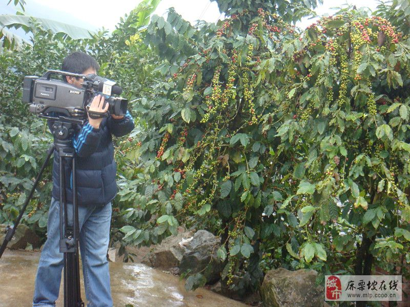 [原创]中央电视台7台在澳门拉斯维加斯官网拍摄咖啡专题片剪影