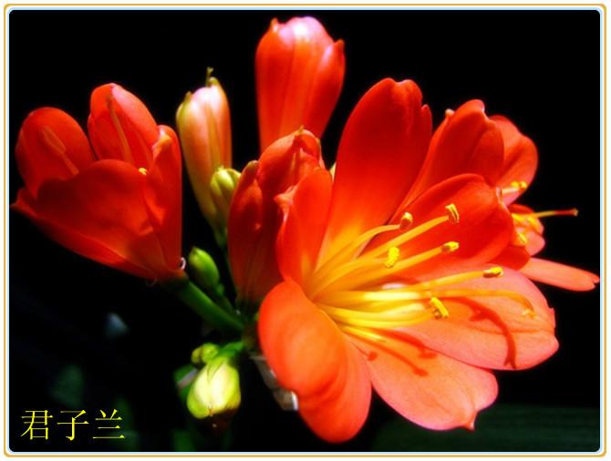 百花园10-兰花(中国十大名花之一)