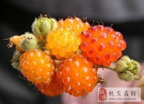 就这水果别说吃,你见过吗?图片