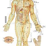 [分享]人体穴位图