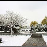 [原创]府谷县之――2012美丽的雪景(图)