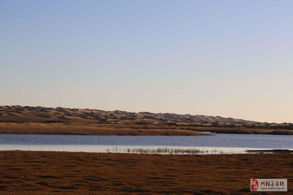 微信头像大漠风景