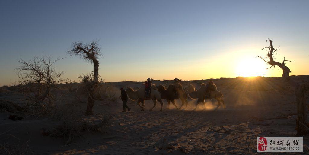 主题: 夕阳中的骆驼和怪树林