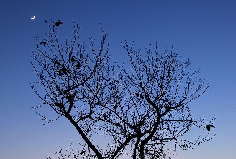 [原创]月亮挂树梢