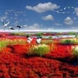 [原创]游美丽神奇的红海滩