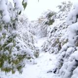 2012秋雪