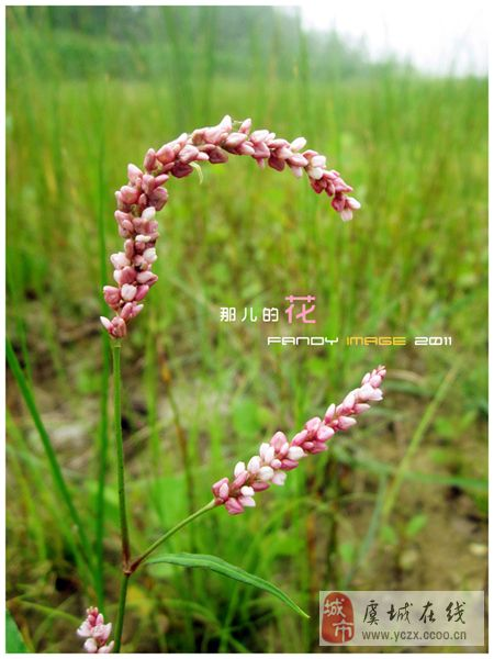 《那儿的花》