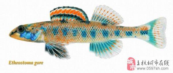 [贴图]那些以总统命名的鱼,你分得清吗?