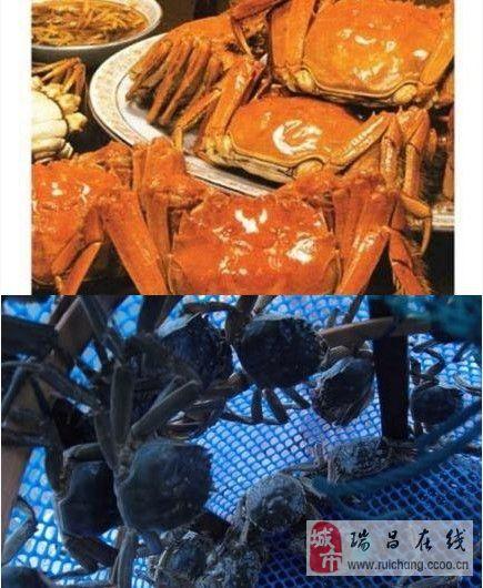 看看这诱人的螃蟹,瑞昌赤湖滴螃蟹基地