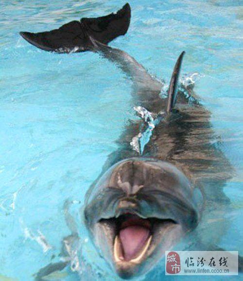 动物的笑脸也很酷(组图)