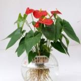 家居植物摆放的八大讲究 你知晓几个?