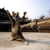 超可爱的猫咪