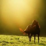 [分享]风轻马蹄飞,放歌晨光里。