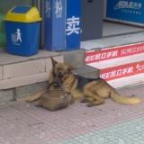 [�D�N]�@��狗狗有�c型