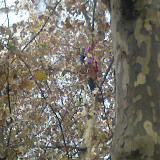 [�D�N]清��路有人爬到�渖弦�吊�i。