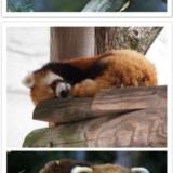 小熊猫告诉你:周末应当怎样度过,才不虚度年华