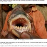 渔夫和巨型鱼 多人生殖器被吃
