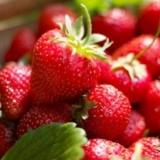 新鲜草莓采摘,感受农家乐趣