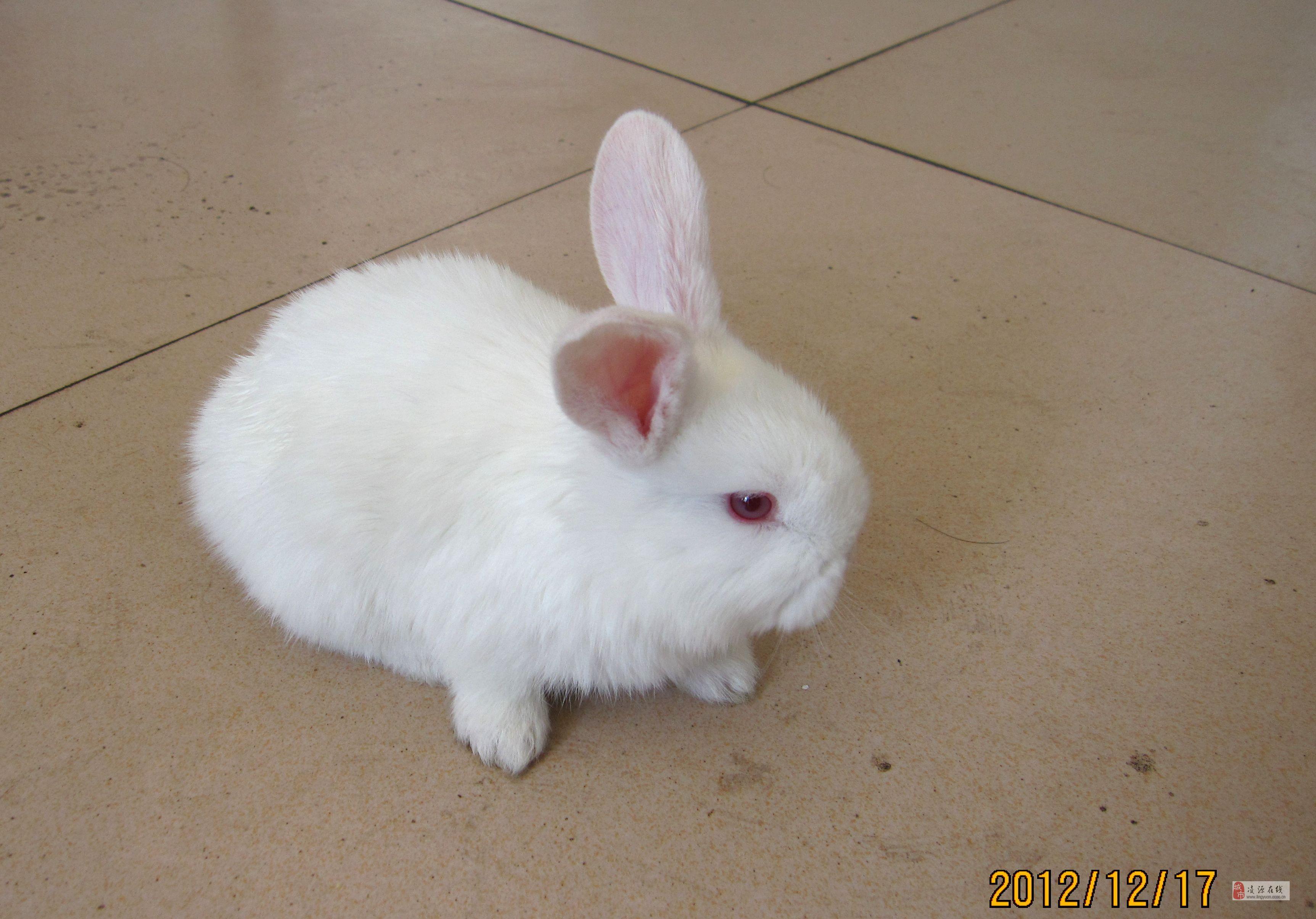 小白兔儿歌简谱 小白兔乖乖儿歌视频 儿歌简谱歌谱