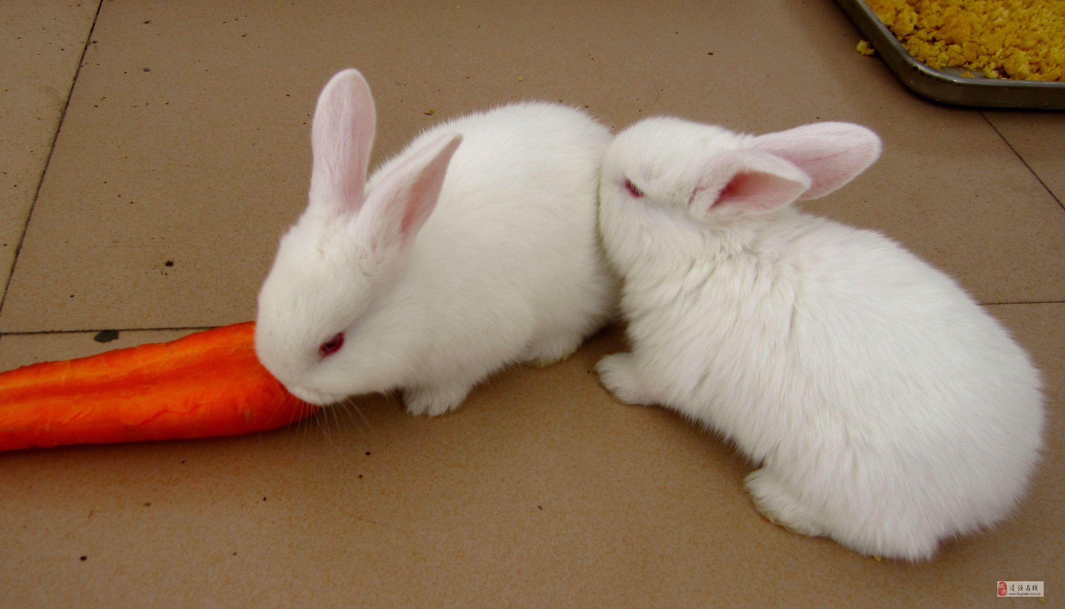 小白兔,白又白···_影友园地